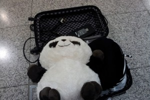 Pandaren taking up most of my carry-on luggage! >